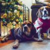 Dash and Chance Christmas 2019 #2