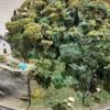 Sedum Trees on the layout 521