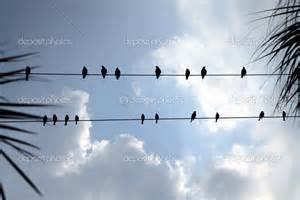 wirebirds