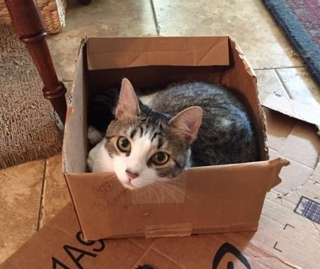 Box Car Cat