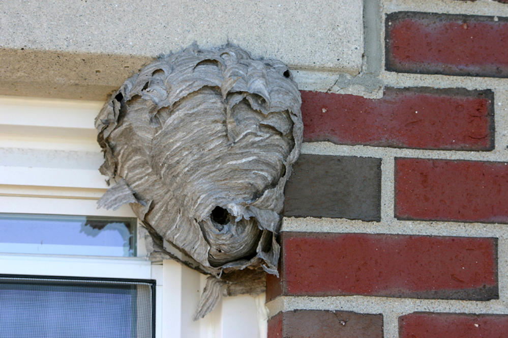 Wasp Nest Found In Caboose O Gauge Railroading On Line Forum