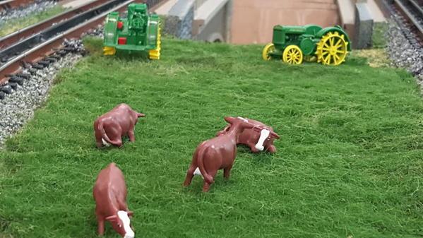 BDF_cows
