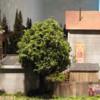 Village neighbors, rear
